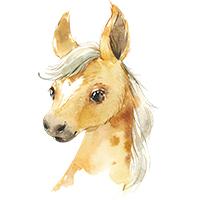 paarden strijkapplicaties