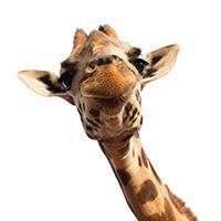savanne dieren strijkapplicaties