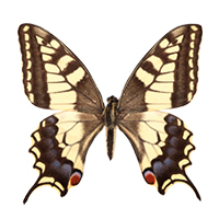 vlinders strijkapplicaties